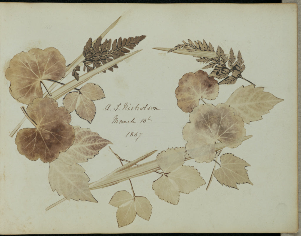John Wheeley Gough Gutch:[Wreath of leaves and branches],16x12