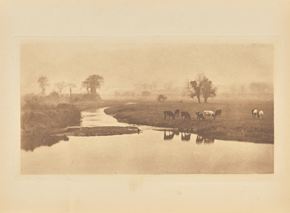"Peter Henry Emerson:[Sheep on the Marshes],16x12""(A3)Poster"