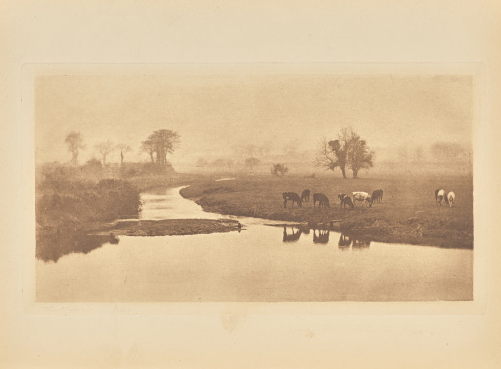Peter Henry Emerson:[Sheep on the Marshes],16x12