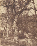"John StewartAttributed to:[Wooded Landscape with Stream],16x12""(A3)Poster"