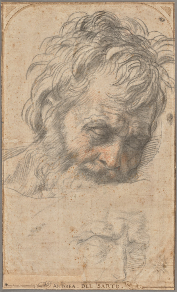 "Andrea del Sarto:Study for the Head of Saint Joseph (recto);,16x12""(A3)Poster"