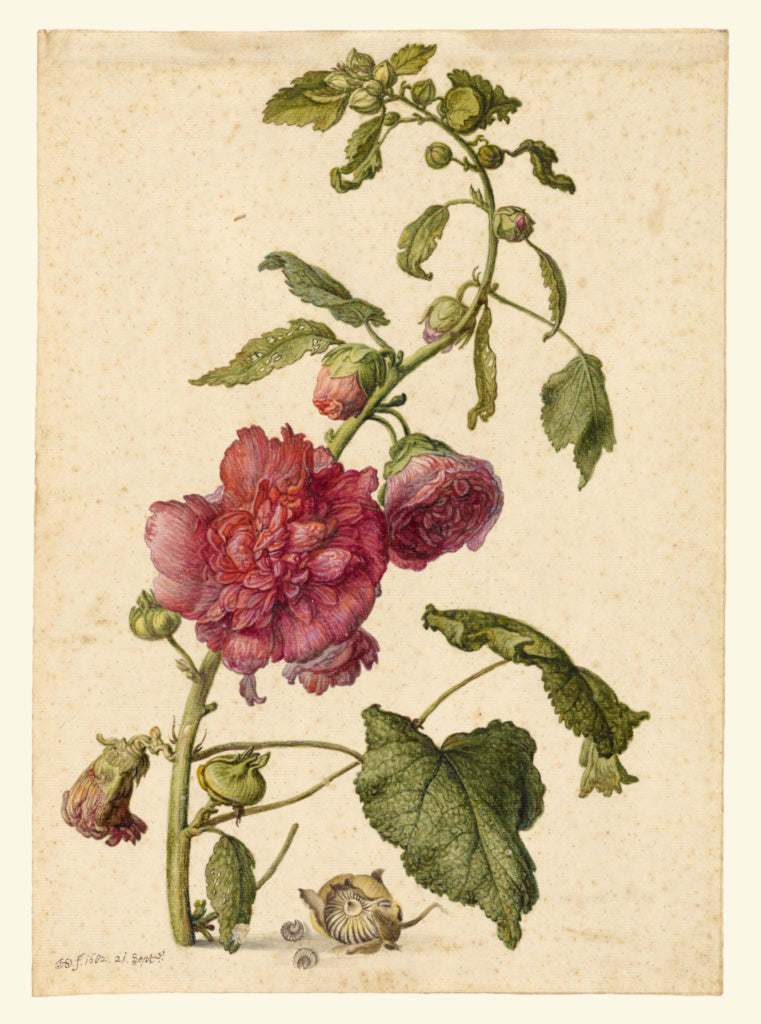 Herman Saftleven the Younger:A Hollyhock,16x12