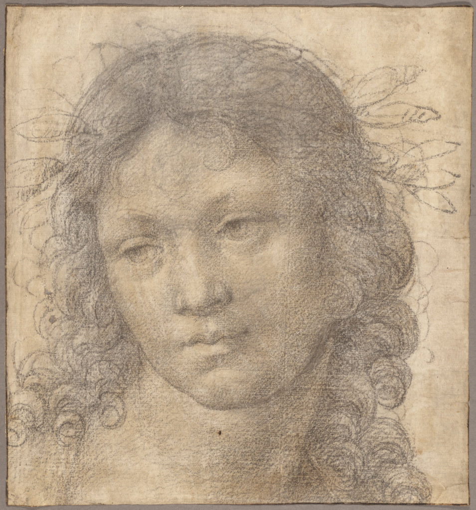 Lorenzo di Credi  , about 1456 - 1536):The Head of a Young B,16x12