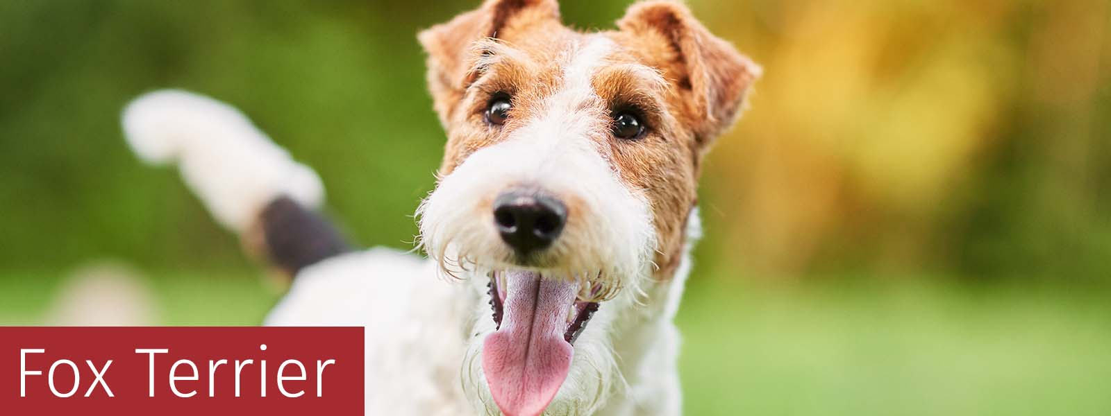 Fox Terrier Gifts
