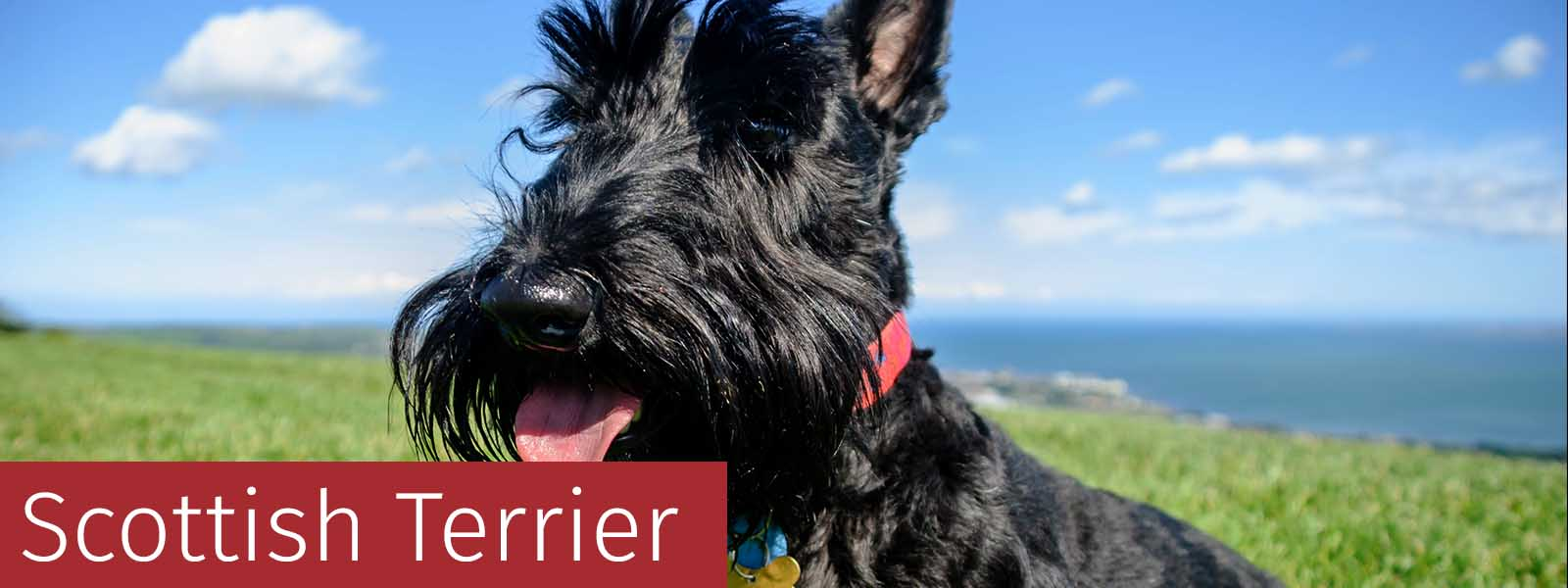 Scottish Terrier Gifts