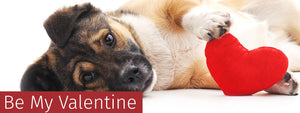 Pawfect Valentine's Day Gifts