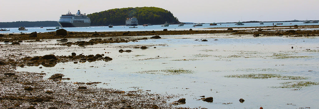 bar island hike at low tide