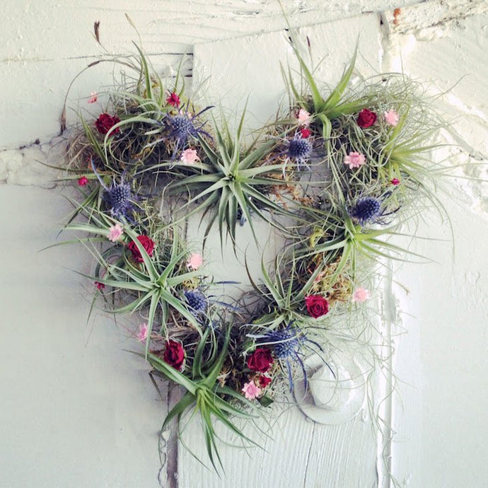 Top 10 DIY Air Plant project