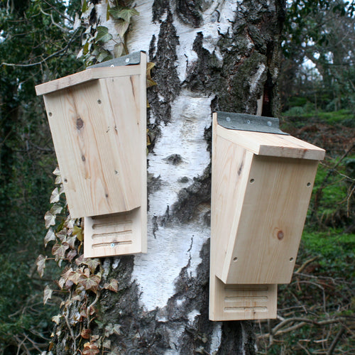 Bat Box - Wudwerx
