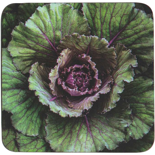 Cabbage Green Square Art Coasters - Set of 4