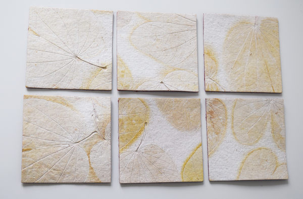 cream heartleaf imprint coasters x6