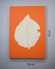 Orange wall poster with teak leaf imprint with measurements