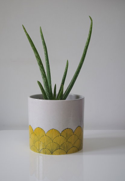 pankha, yellow and white fan patterned planter with plant