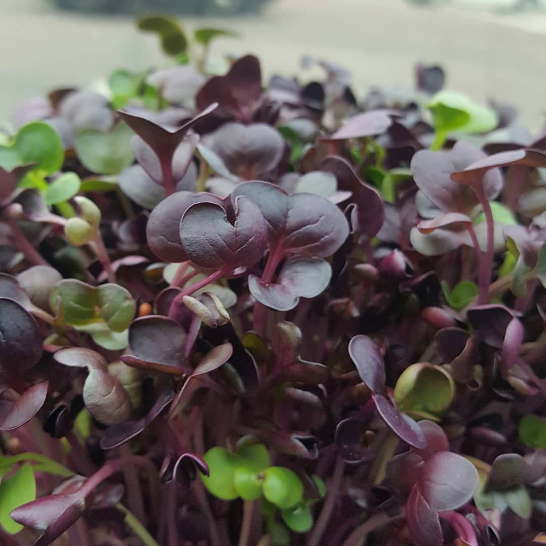 Whats up with microgreens?