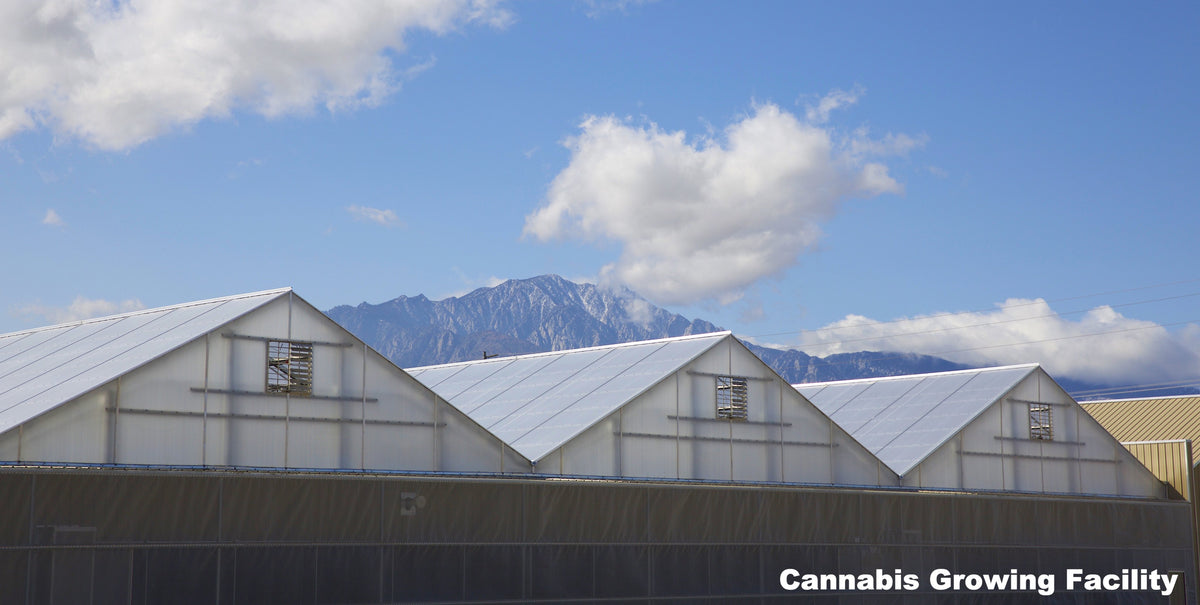 Cannabis Growing Facilities