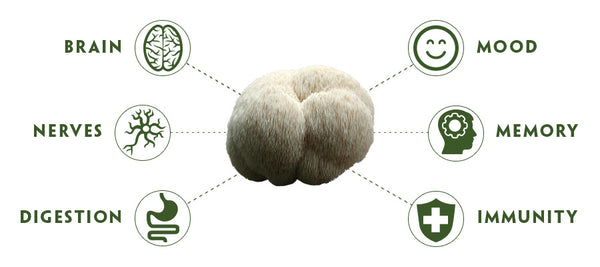 Teelixir Lion's Mane Mushroom Health Benefits