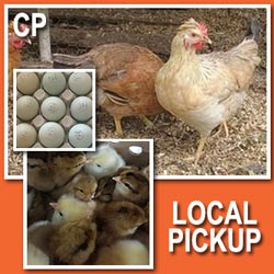 ColorPack Layer (Pullets)