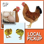 Golden Pride (Pullets)