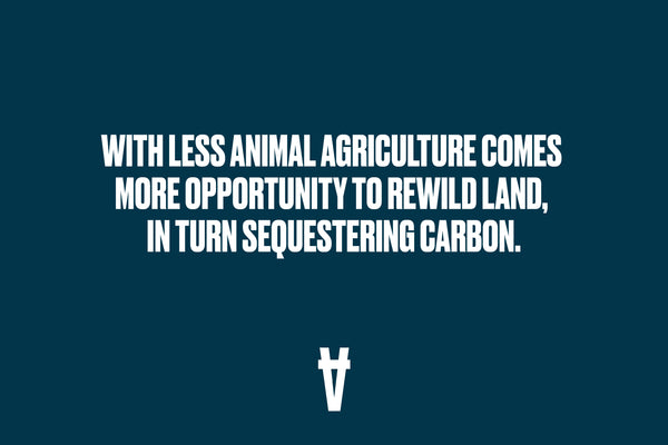 With less animal agriculture comes more opportunity to rewild the land.
