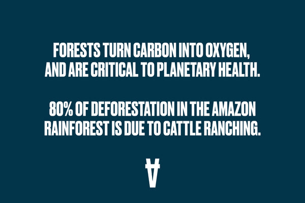 An image with the words 80% of deforestation in the Amazon Rainforest is due to cattle ranching.