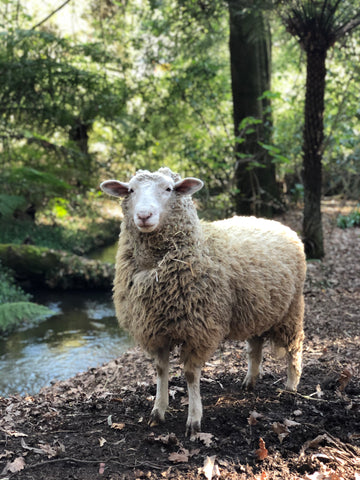 A sheep stands in a lush bush setting.