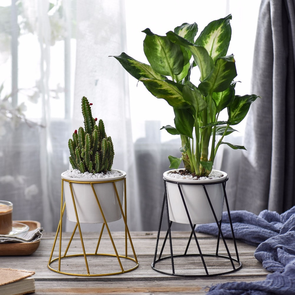 6 Quick Tips To Keep Your Indoor Plants Alive