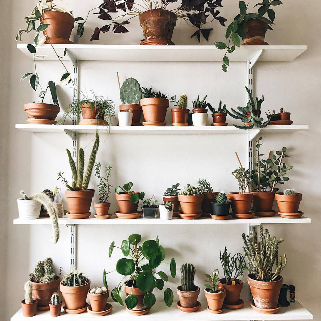 Questionnaire - Are You A Houseplant Addict?