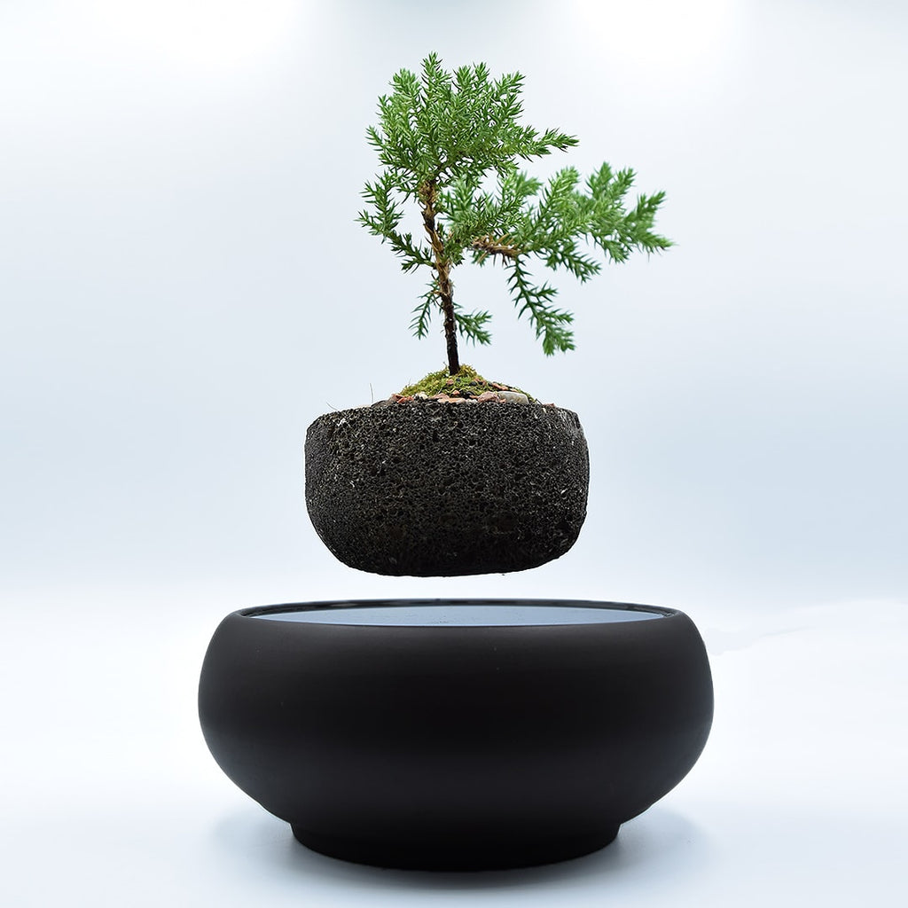 LYFTED Dark Levitating Planter - Lyfted Decor Australia