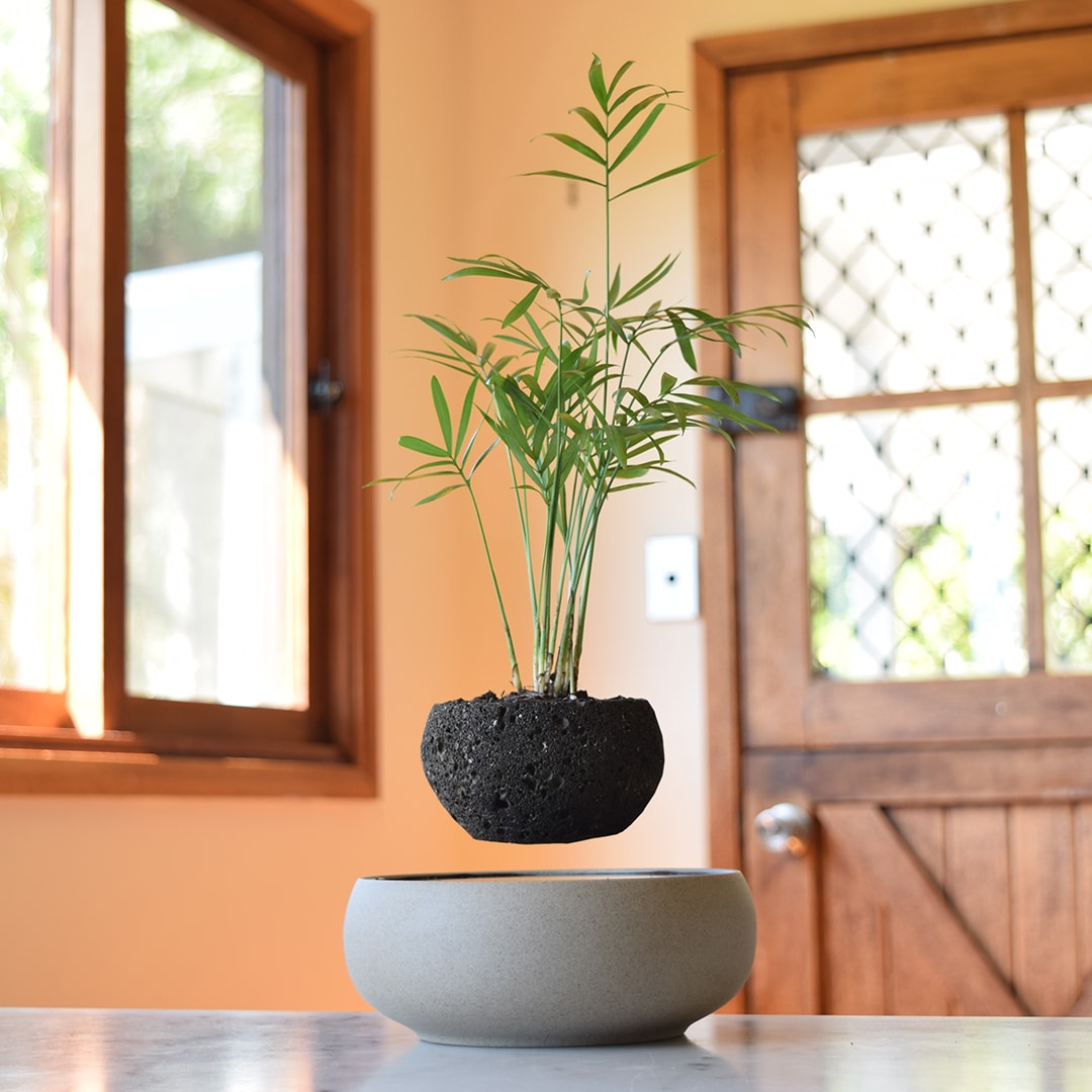 LYFTED Light Levitating Planter - Lyfted Decor Australia