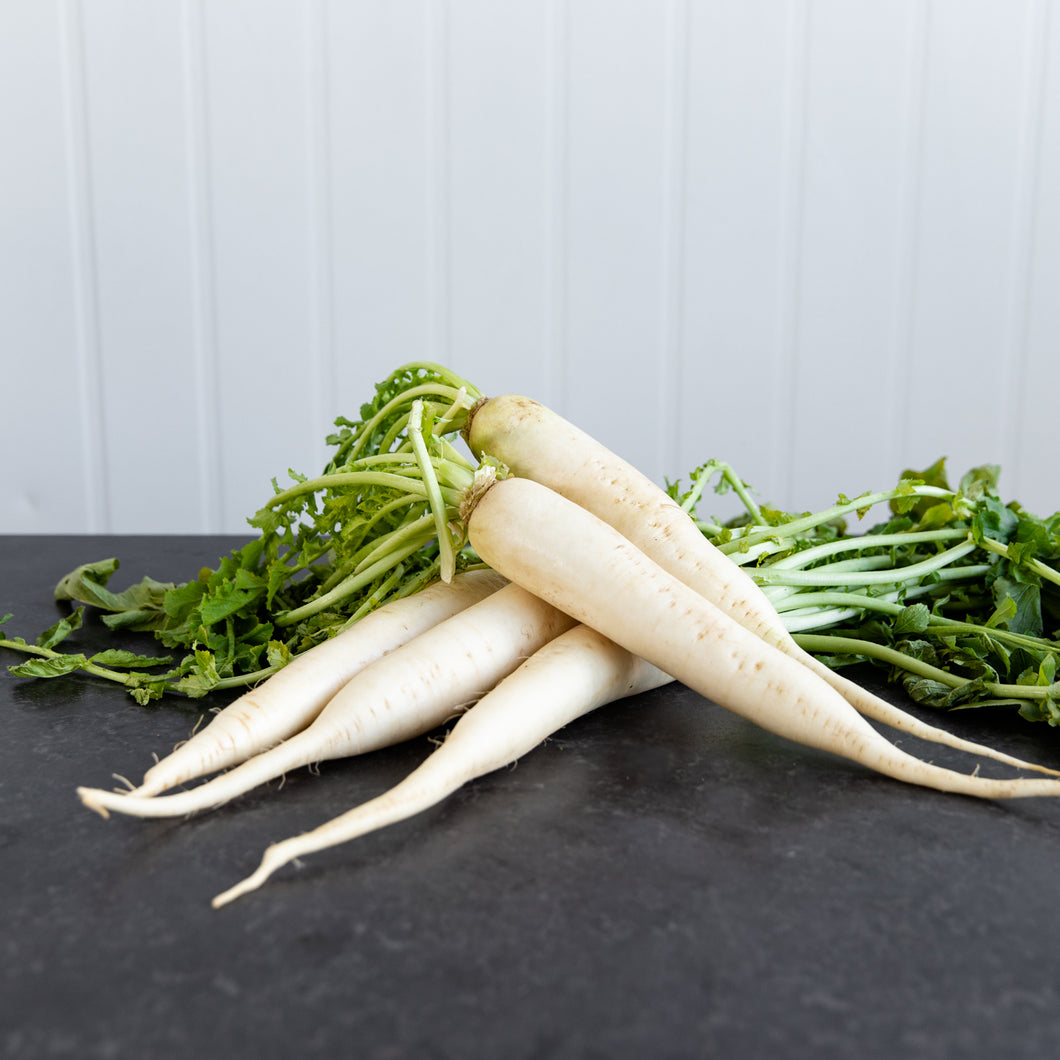 White Radish Daikon (Each)
