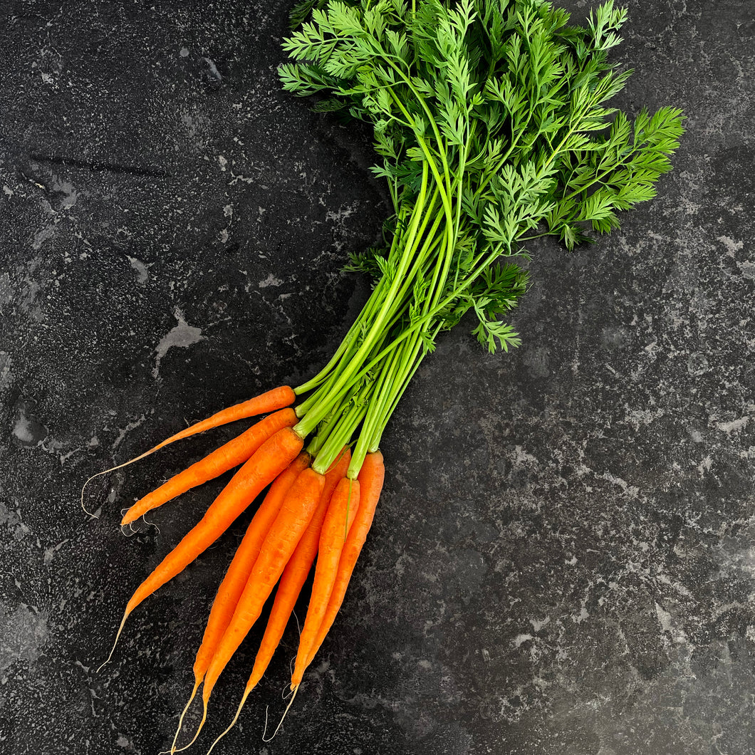 Carrot Dutch (Bunch)