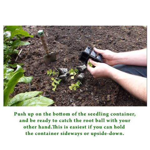 steps to Transplant Vegetable Seedlings