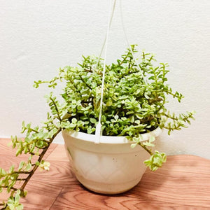 jade mini hanging pot