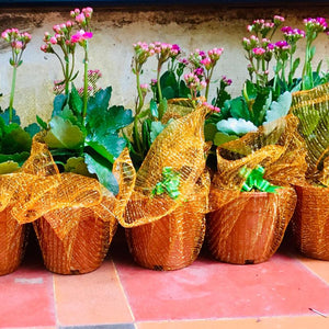 gift wrapped plants
