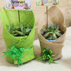 succulent with jute packing