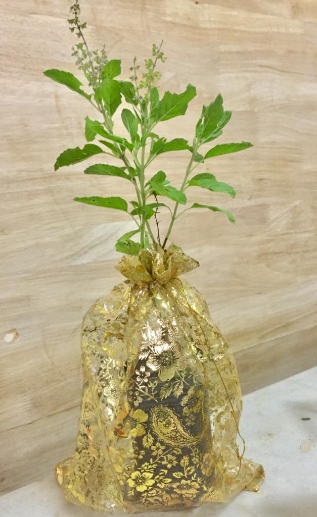 herbal plant gift wrapped