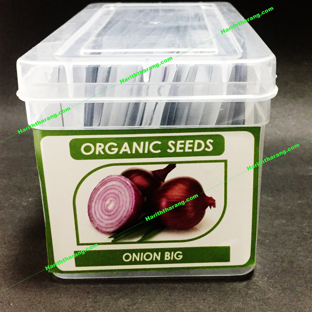Big onion seeds