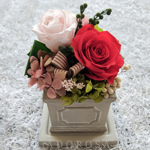 rose, preserved rose, preserved flower, rose box, flower