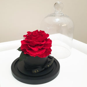 glass dome rose, luxury rose sydney, long lasting rose sydney, everlasting roses, preserved roses, valentine's day, rose box