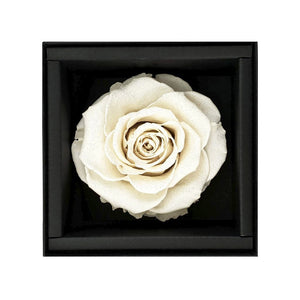 white rose, black rose, rose box, rose box sydney, flower, flower box, flower box sydney, sydney flower delivery, eternity rose, long lasting rose, preserved rose, preserved flower, long lasting roses sydney
