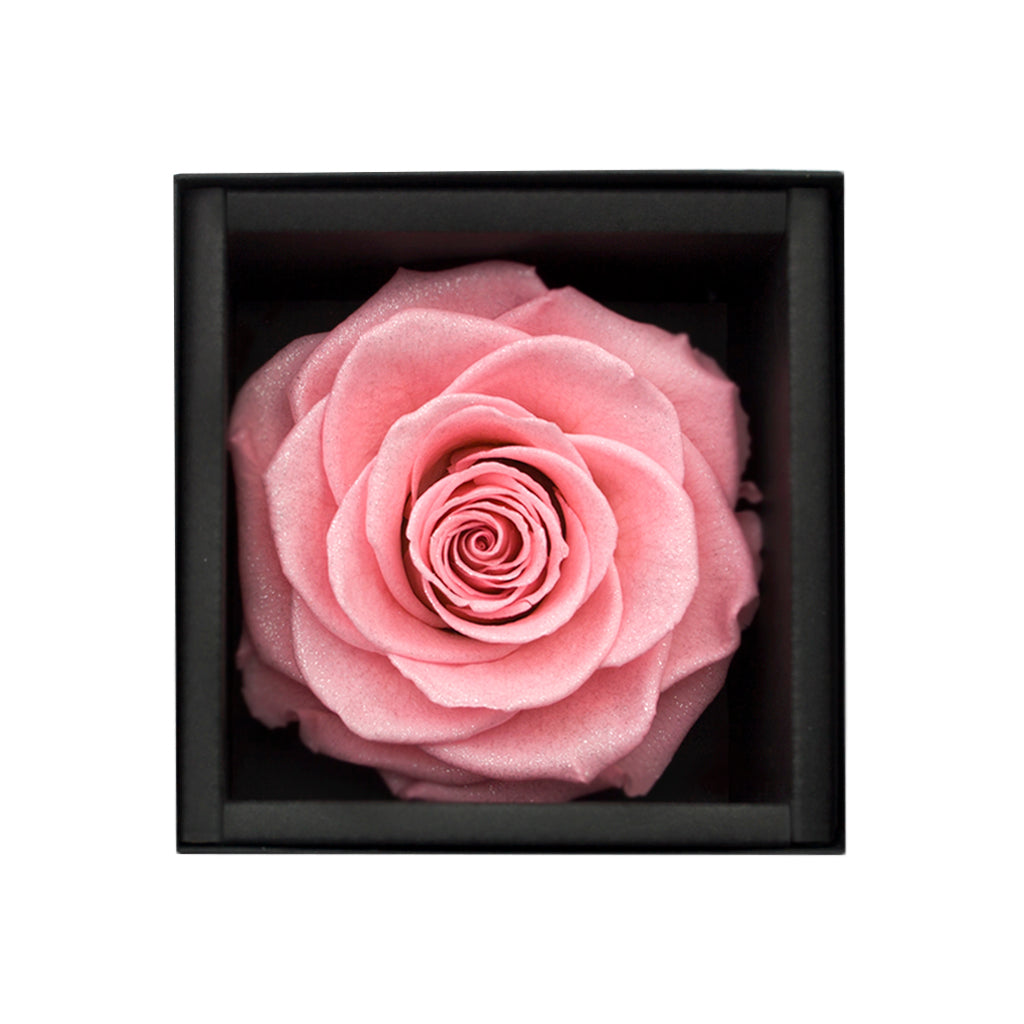 pink rose, preserved rose, preserved flower, long lasting rose, rose box, flower box, sydney florist, flower delivery sydney, eternity rose, rose box sydney, flower box sydney, rose delivery, birthday gift, wedding gift