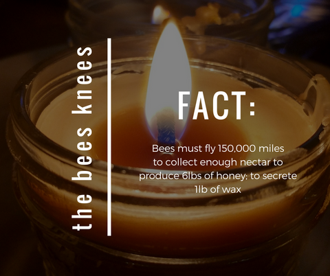 COUNTRYSIDE TREASURES - The Bees Knees - Facts about bees & beeswax