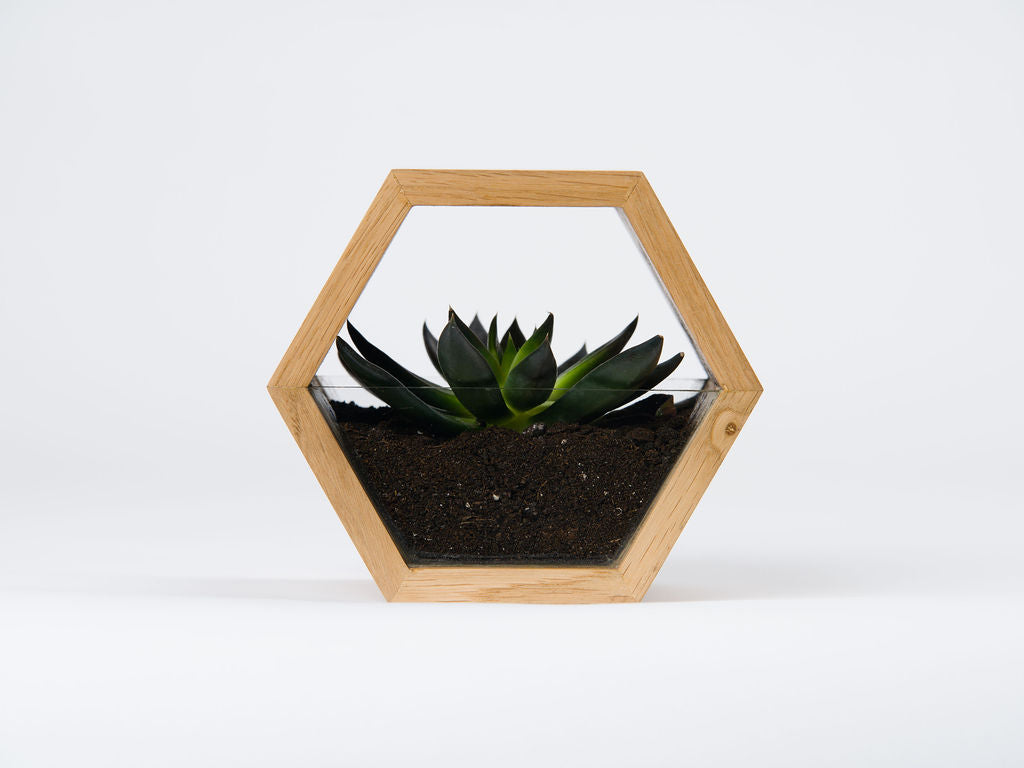 Planters with Glass