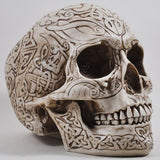 Celtic Skull in Bone Finish by Design Clinic 19cm