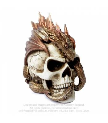 Dragon Keeper's Skull 21cm