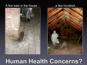 Human Health Concerns and Bats