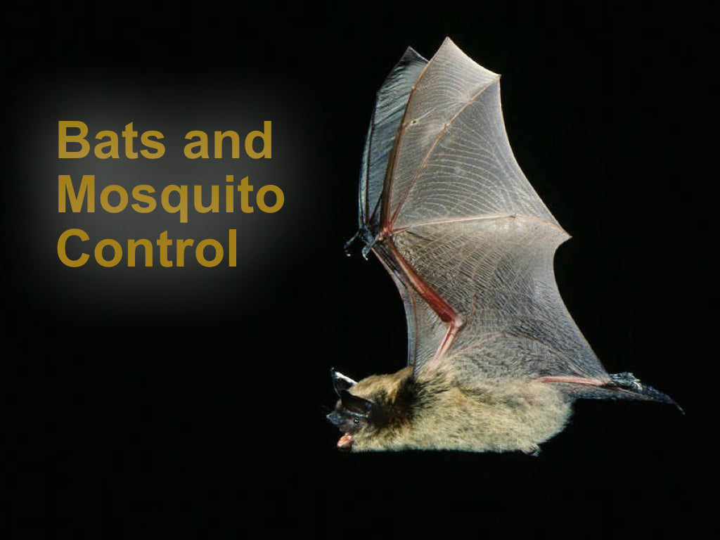 Bats and Mosquito Control – Bat Conservation and Management
