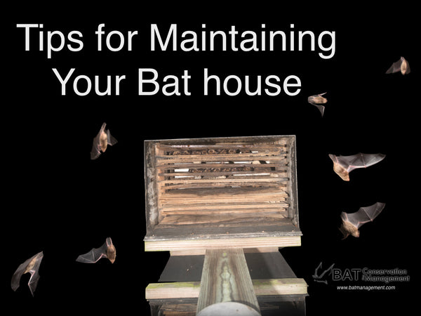How to Maintain Your Bat House