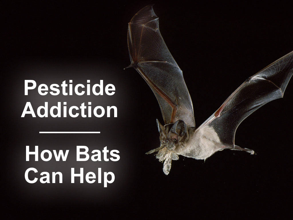 Pesticide Addition: How Bats Can Help – Bat Conservation and ... on 1800 sq ft ranch house plans, under 100 square feet architect plans, 2 000 sf ranch house plans, 2000 sq foot house plans, 2000 square feet, inexpensive two-story house plans, 2000 square foot english cottage house plans, 1500 sq ft ranch plans,
