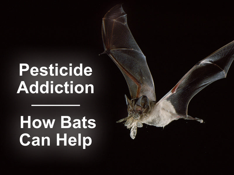 Pesticide Addition: How Bats Can Help
